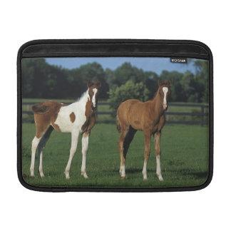 Arab Foals Standing in Grassy Field MacBook Air Sleeve