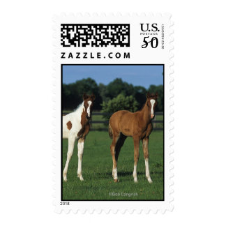Arab Foals Standing in Grassy Field Postage