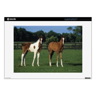 """Arab Foals Standing in Grassy Field Skin For 15"""" Laptop"""