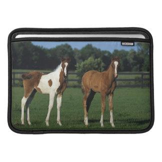 Arab Foals Standing in Grassy Field Sleeve For MacBook Air