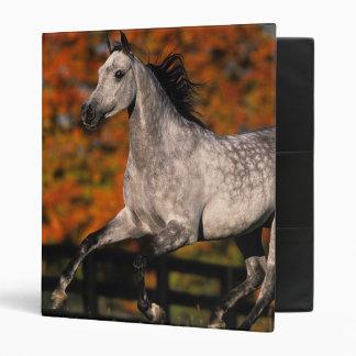 Arab Horse: Autumn 1 3 Ring Binder
