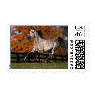 Arab Horse Autumn 1 Postage