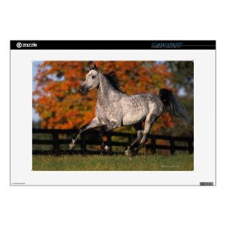 """Arab Horse Autumn 1 15"""" Laptop Decals"""