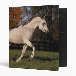 Arab Horse: Autumn 2 Binder