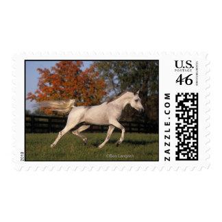 Arab Horse Autumn 2 Stamps