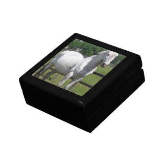 Arab Horse  Gift Box