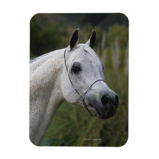 Arab Horse Headshot 1 Magnet
