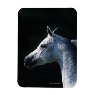 Arab Horse Headshot 2 Magnet
