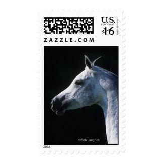 Arab Horse Headshot 2 Postage