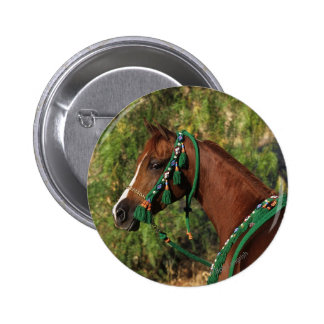 Arab Horse Headshot with Bridle Pinback Button