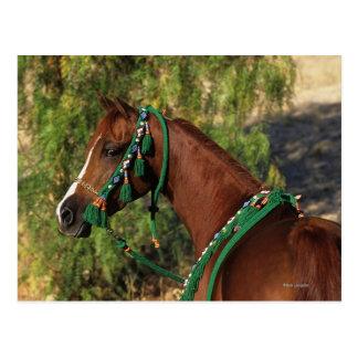 Arab Horse Headshot with Bridle Postcard