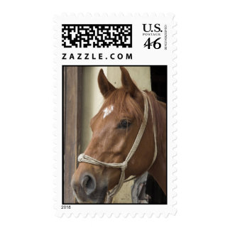 Arab Horse Postage Stamp