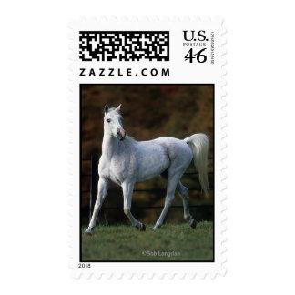 Arab Horse Running 1 Postage