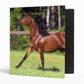 Arab Horse Running 2 3 Ring Binders