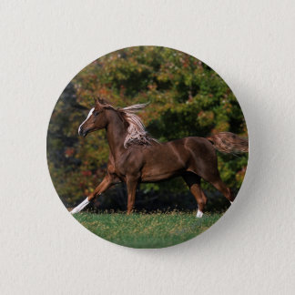 Arab Horse Running in Grassy Field Button