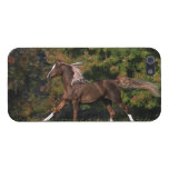 Arab Horse Running in Grassy Field Cases For iPhone 5