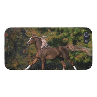 Arab Horse Running in Grassy Field Cover For iPhone 5