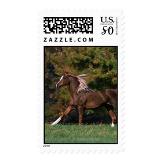 Arab Horse Running in Grassy Field Postage