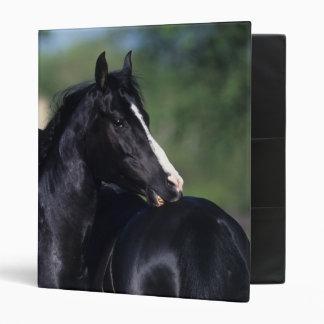 Arab Horse Scratching Vinyl Binders