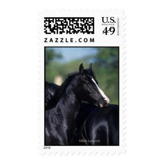 Arab Horse Scratching Postage Stamp