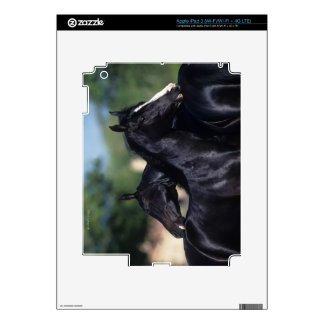Arab Horse Scratching Skins For iPad 3