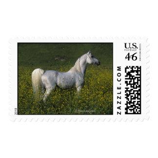 Arab Horse Standing in Flowers Postage