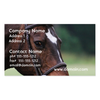 Arab Horse with White on Face Business Card