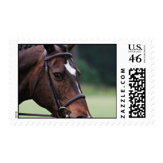 Arab Horse with White on Face Postage Stamp