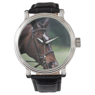 Arab Horse with White on Face Watch