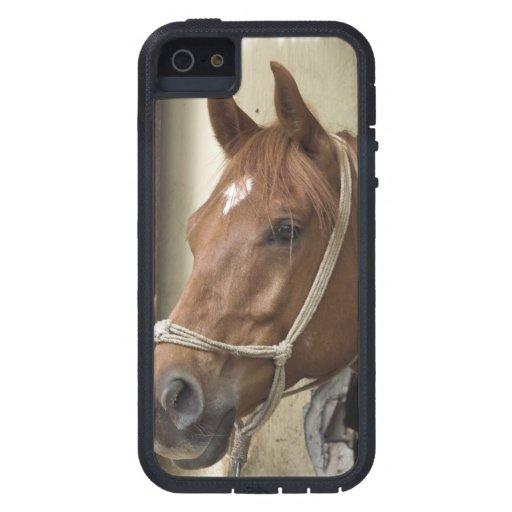 Arab Horses Case For iPhone 5