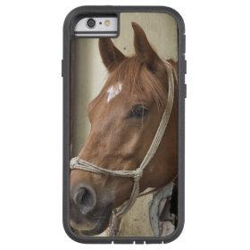 Arab Horses Tough Xtreme iPhone 6 Case