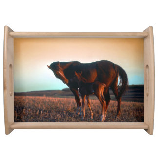 Arab mare and foal. food trays