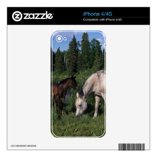 Arab Mare & Foal 2 Decal For The iPhone 4S