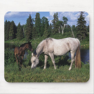 Arab Mare & Foal 2 Mouse Pad