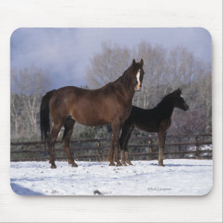 Arab Mare & Foal in Snow Mouse Pad