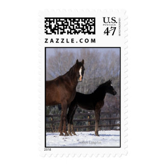 Arab Mare & Foal in Snow Postage