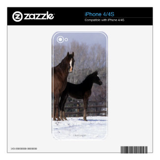 Arab Mare & Foal in Snow Decals For The iPhone 4