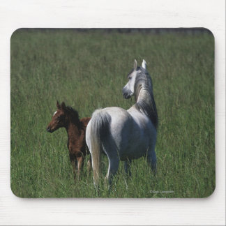 Arab Mare & Foal Mouse Pad