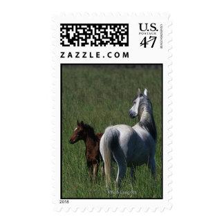 Arab Mare & Foal Postage