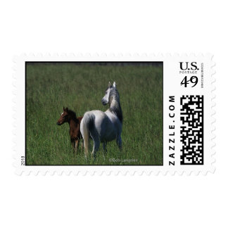 Arab Mare & Foal Postage Stamp