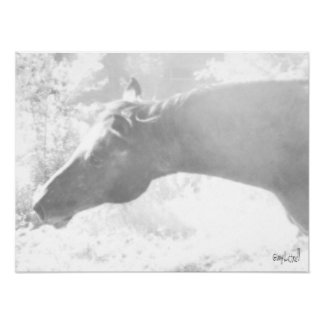 Arab Mare in Black and White Poster