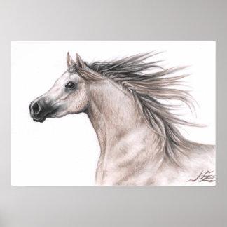 Arab portrait - Arabian Horse Poster