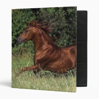 Arab Stallion Running in the Grass Binder