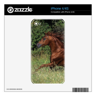 Arab Stallion Running in the Grass Decals For The iPhone 4S