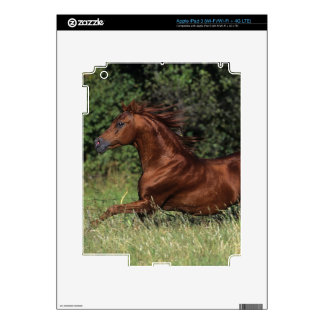 Arab Stallion Running in the Grass Decal For iPad 3