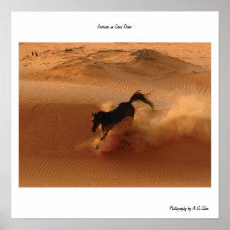 Árabe en la duna de arena posters