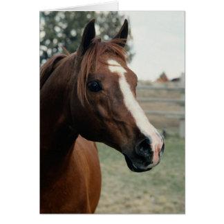 Arabian at Pasture Card