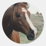 Arabian at Pasture Classic Round Sticker