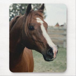 Arabian at Pasture Mouse Pad