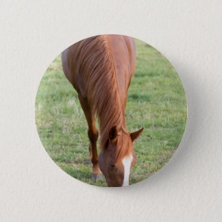 Arabian Brown Horse Front Standing Perfect Mane Button